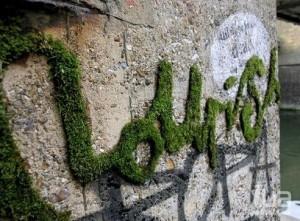 Надписи и рисунки мхом на стене дома